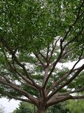 Tree. A big tree Royalty Free Stock Images