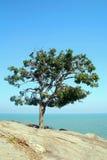 Tree. Big tree with beautiful sea views in Thailand Stock Image