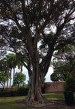 Tree. Big old tree Stock Image