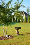 Tree with bird bath and grass background Royalty Free Stock Images