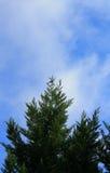 Tree/Bird and Blue Sky Royalty Free Stock Photography