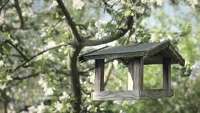 Tree with bird box, wooden bird feeder. Apple blossom flower. Detail of fall petals on spring theme. White flower, celebration of spring. Lovely composition stock video