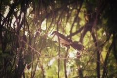 Tree with bird Royalty Free Stock Photo