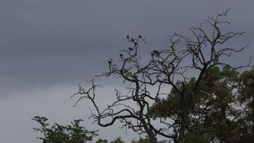 Tree and bird filmed in timelapse. With background grey sky stock video footage