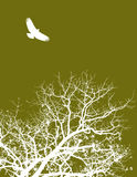 Tree and bird illustration. Illustration of silhouetted branches of a tree with a bird flying above, available in vector with space for text Royalty Free Stock Photography