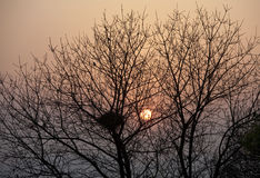 Tree and Bird's Nest. Sunset, tree and bird's nest side by side Royalty Free Stock Photos