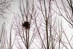 The tree of the bird`s nest stock photos