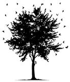 Tree and birds. Scores of birds flies around a lonely tree Stock Photography