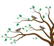 Tree Birds Stock Image