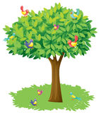 A tree and birds. Illustration of a tree and birds on a white background Royalty Free Stock Photo