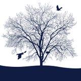 Tree with birds Royalty Free Stock Photos