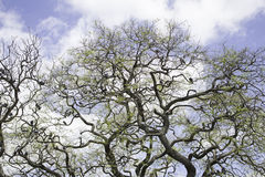 Tree with birds Royalty Free Stock Photo