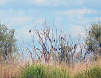 Tree with birds. In the Danube Delta Royalty Free Stock Photo
