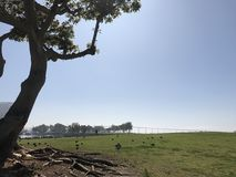 Tree with Birds on Grassy Knoll. Sunny background with a tree and birds on a grassy knoll near water and bridge Royalty Free Stock Images