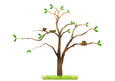 Tree with birds nesting Stock Photography