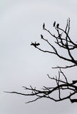 Tree with birds Royalty Free Stock Image