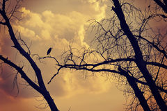 Tree and birds on the sunset Royalty Free Stock Images