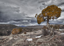 Tree in the Black Canyon of the Gunnison, CO Stock Image