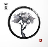 Tree in black enso zen circle. Royalty Free Stock Image