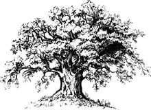 Vector tree. Black ink realistic vector tree Royalty Free Stock Images
