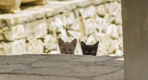 Tree black  kittens Stock Photos