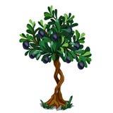 Tree with black olives on white background Stock Photo