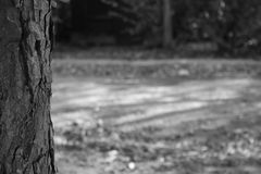 The only tree. A tree in black and whit Stock Photo