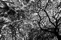 Tree Black and white. Background Royalty Free Stock Photography