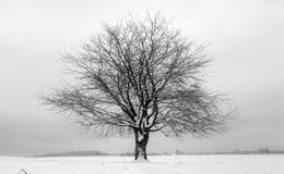 Tree black white Stock Photography