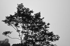 Tree-Black&white. Tree is on the mountain at thailand Royalty Free Stock Photography
