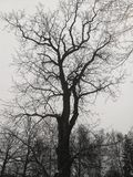 Tree, black and white royalty free stock photography