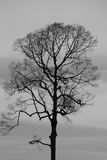 Tree. Black and white picture Royalty Free Stock Images