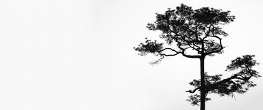 Tree black and white stock images