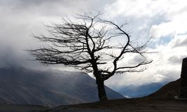 Tree. Black tree in winter near the saddle, Queenstown, New Stock Photography