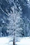 Tree blanketed with snow Stock Photo