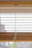 Blinds. Tree blinds half way down Stock Image