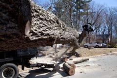 Tree blocking road Royalty Free Stock Images