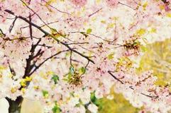 Tree in bloom Stock Photos