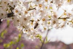 Tree in bloom Stock Photo