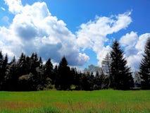 Tree. Bloom, grass, blue, green, Sky Stock Photography