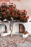 Tree in bloom by summer house, tinted image. Tree in bloom by a summer house, Corralejo in Fuerteventura, tinted image Royalty Free Stock Images