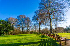 Tree blossom with benches in Botanical Gardens against blue sky, Stock Photography