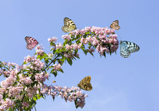 Tree blossom and butterfly in springtime Royalty Free Stock Photography