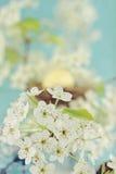 Tree Blossoms Royalty Free Stock Photos