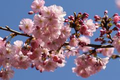 Tree blossoms Stock Photography