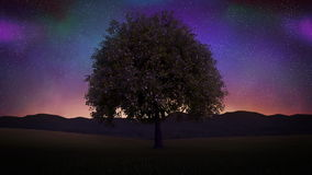 Tree blowing at night. Seamless Loop. Time lapse of a tree blowing in the wind at night. Sky full of stars, 100% Seamless loopeable stock video footage