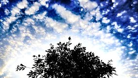 The Tree on the Blue Background and Cloudy Sky. The shadow of tree in blue sky and cloudy day royalty free stock images
