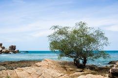Tree and blue sea Royalty Free Stock Photo