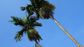 Tree and the blue sky. The tree and the blue sky stock video footage
