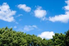 Tree and blue sky Stock Photos